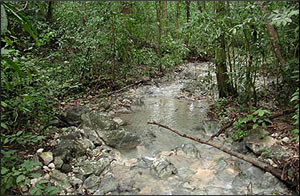 Fresh water is available along the trails of Cabo Blanco Absolute Reserve