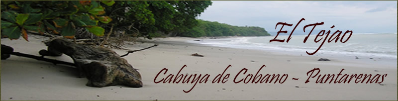 El Tejao vacation rental, banner site, Cabuya beach in high tide